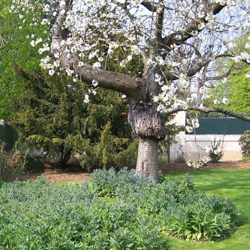 Les Jardins à l'Ancienne de Nicolas Gobert