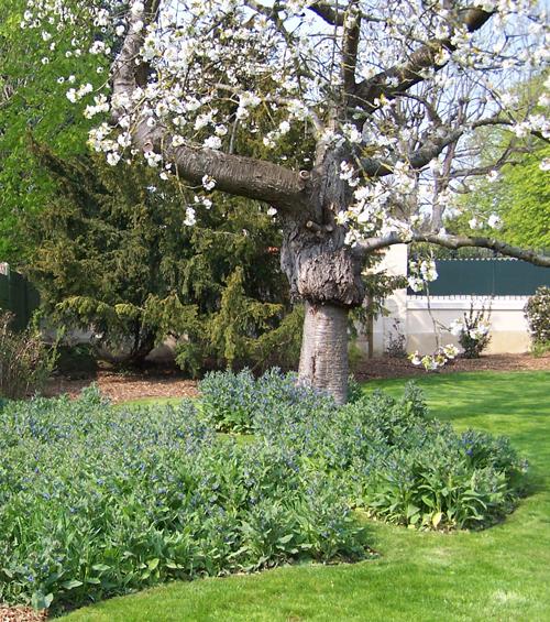 Les Jardins à l'Ancienne, jardin art nouveau, conception paysagère, nicolas gobert