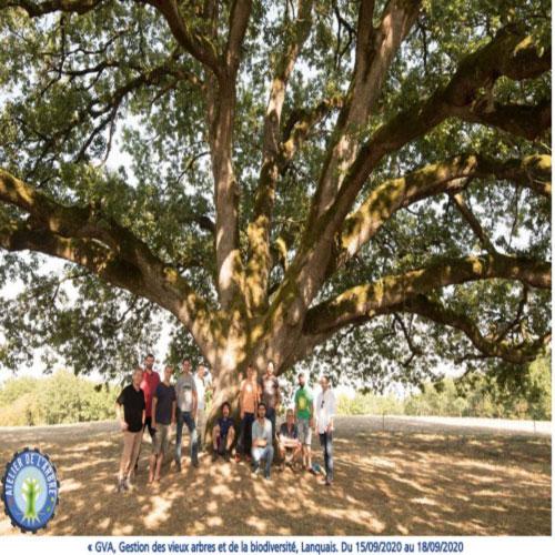 photo groupe atelier arbre GVA