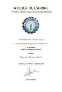attestation suivi de stage champignons lignivores et arbre