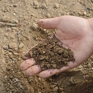 amendement du sol