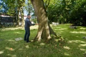 expertise arboricole au marteau